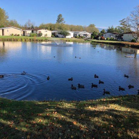 Park Village pond with ducks